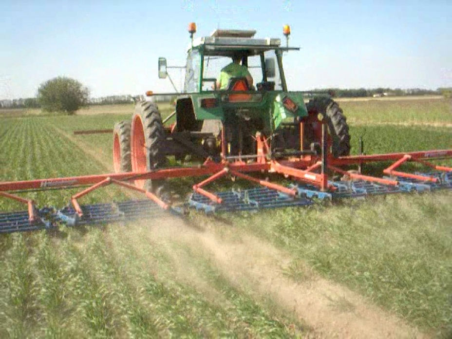 Removing weed by harrowing